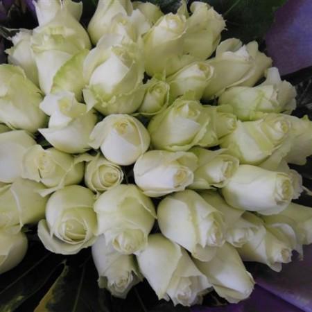 40-white-roses